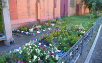Земляника и розы у цеховых стен